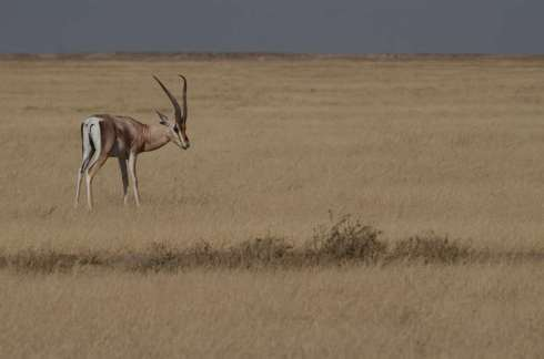 Parc du Serengeti