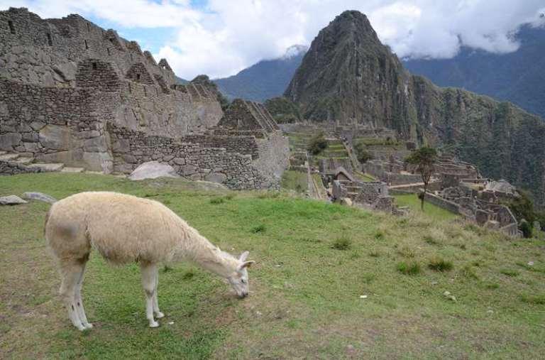 Machu Picchu et lama