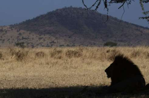 Tanzanie, parc du Serengeti